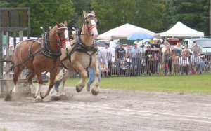 Haliburton County Fair Activity